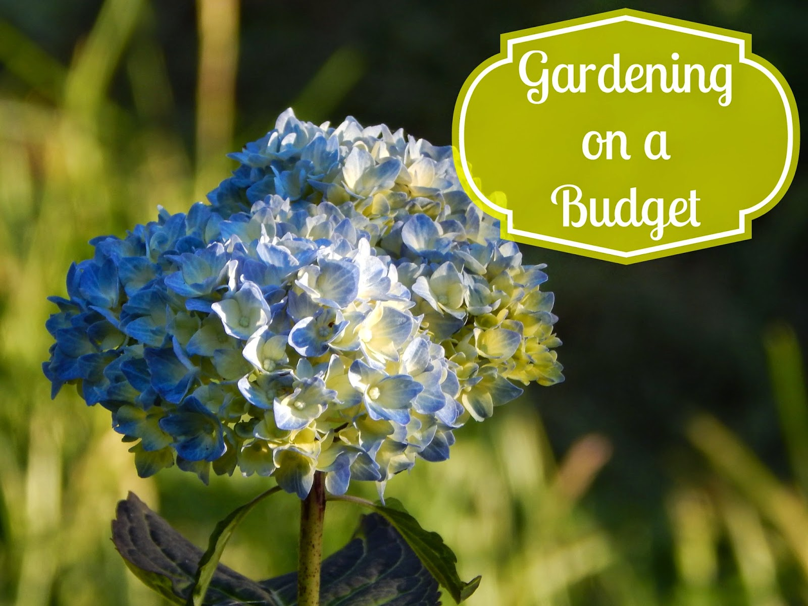 Gardening on a budget 5 ways for Second hand garden tools